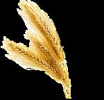 wheat-header1