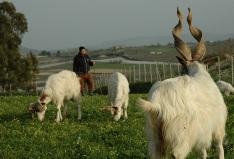 3-giacomo-gati-con-le-sue-capre-al-pascolo