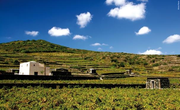 Pantelleria Cantina Donnafugata_ph_Pakula